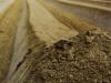 1 Anna Radaelli - La vita dell'asparago